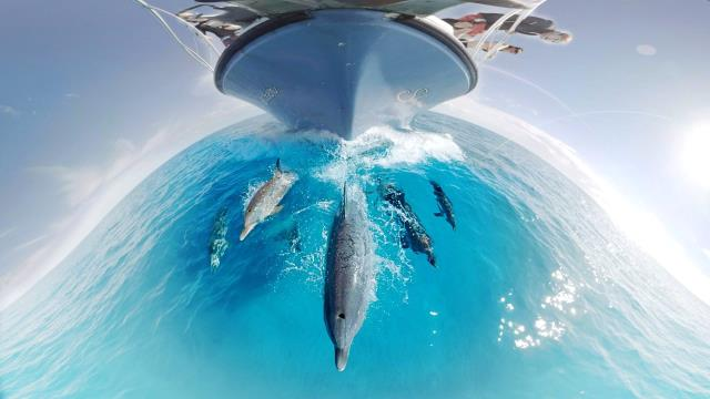 Gopro Vr: Swimming With Wild Dolphins İn The Ocean, System.String[]