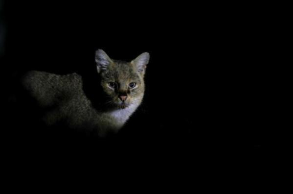 He photographed every moment of the jungle cat for 5 days, System.String[]